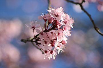 Bloesem roze, pink,  van Wilma Meurs