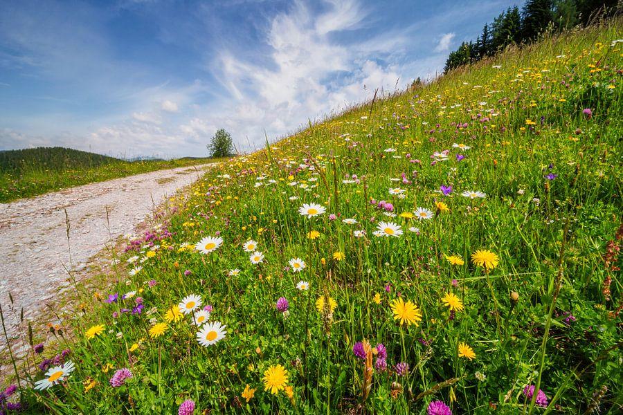 Bloemen in de bergen