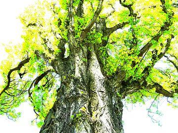 Tree Magic 118 van MoArt (Maurice Heuts)