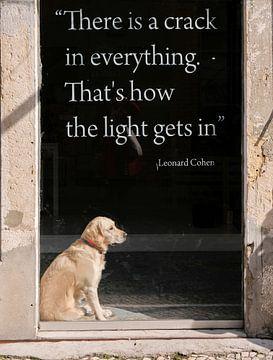 Hond in etalage