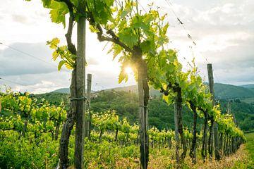 Prachtige wijnranken in Toscane van Natascha Teubl