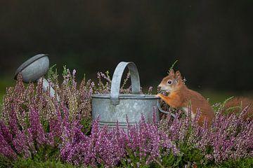écureuil près d'un arrosoir