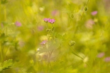 Träumerischer rosa Dunst von Annika Westgeest Photography