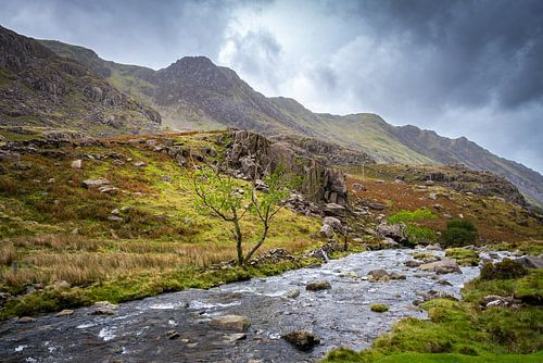 Bergbeek in Wales, Groot-Brittannië
