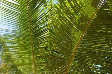 Nahaufnahme Palmblättern von Ingrid Bargeman