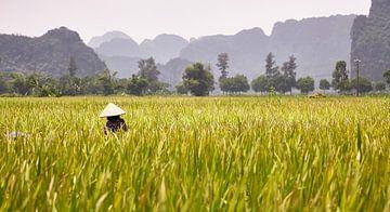 Vietnam Rijst van Graham Forrester