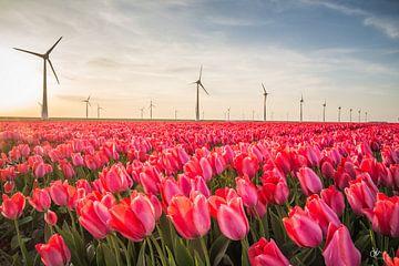 Tulpenveld in de Noordoostpolder van Dirk Maakt