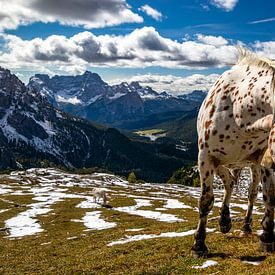 Pferd in Berglandschaft - Dolomiti di Sesto - Veneto - Italien von Felina Photography