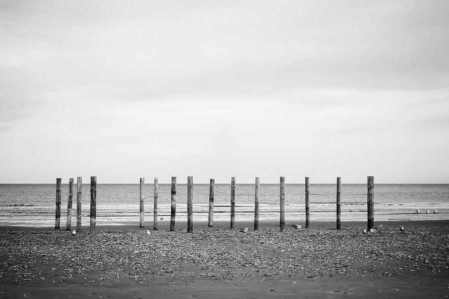 Wood poles in the sand, Schiermonnikoog III
