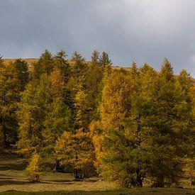 Herfst in de Alpen van Marcel Antons