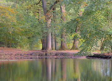 Herbstliche Reflexion von Tania Perneel