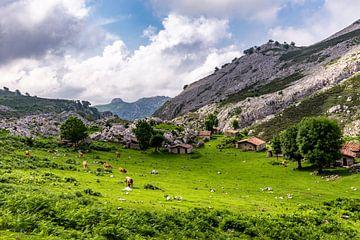 Wiese mit Kühen und Berghütten in Picos de Europa von Easycopters
