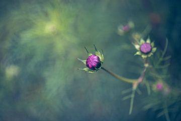Blütenknospe von Kristof Ven