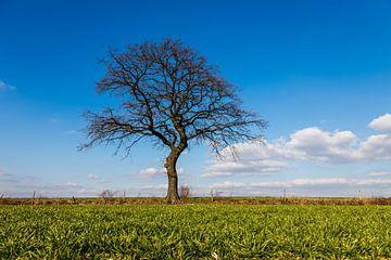 Grüne Wiese mit einem Baum am Horizont im Frühling in Mechelen, Limburg von Kim Willems