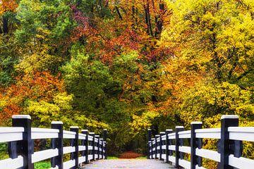 """Boslandschap """"Brug naar de Herfst"""" van Coen Weesjes"""