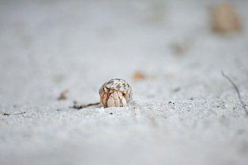 Eenzame krab van Patrick Aniszewski