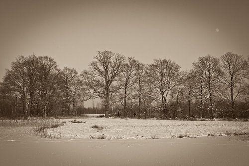 winter, bomenrij in sepia