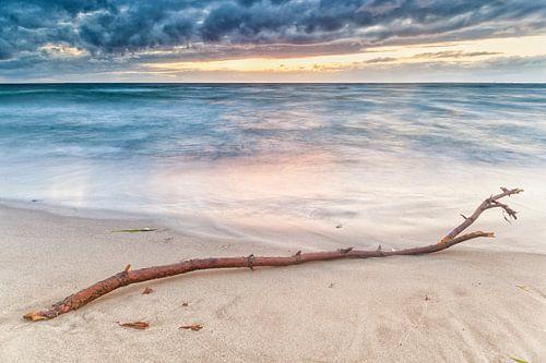 Aangespoelde tak op het strand van Hove-strand, Denemarken