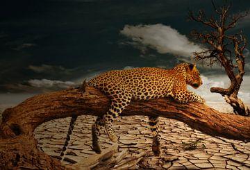 Leopard in de Woestijn