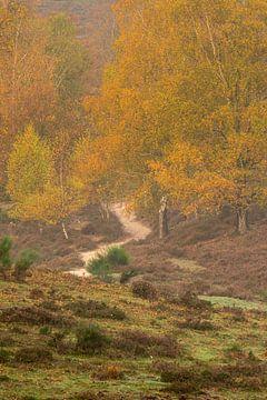 L'automne sur la Posbank