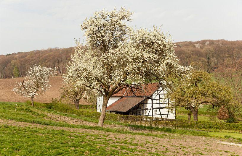 Vakwerkhuisje tussen de bloesem van John Kreukniet
