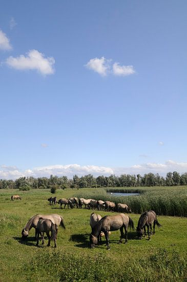 Wilde Paarden van Sjoerd van der Wal