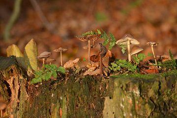 Typisch herfst op een stronk van Klaas Dozeman