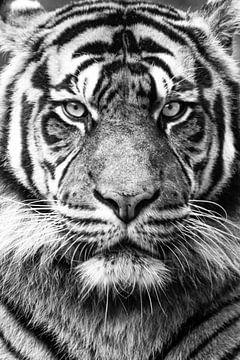 Tiger schwarz-weiß von Marja Suur
