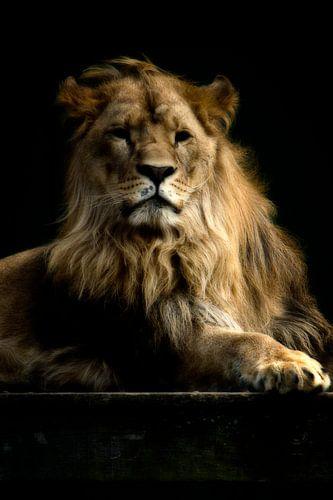 Leeuw Nero