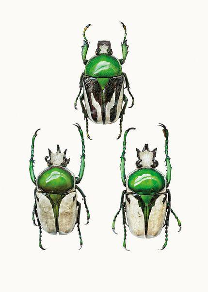 Rariteitenkabinet_Insecten_04 van Marielle Leenders