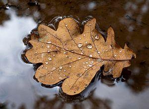 herfstblad in regen plas van