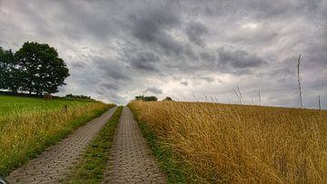 Weg von Andrea Meister