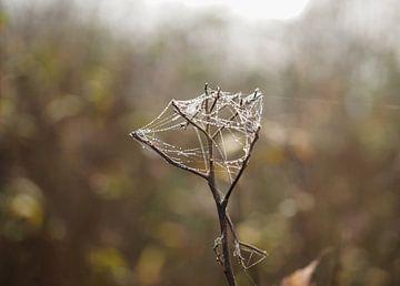 Spinnenweb met druppeltjes verweven in een takje van Anne van de Beek