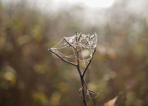 Spinnenweb met druppeltjes verweven in een takje