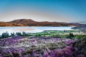 Schotse Heide van