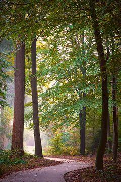 Fietspad door het mistige Veluwse herfstbos van Jenco van Zalk