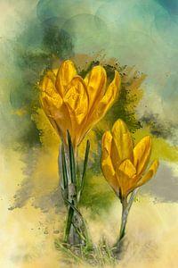Krokussen in bloei van