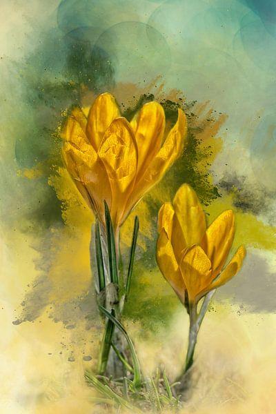 Krokussen in bloei van Harry Stok