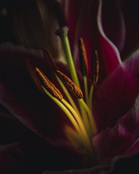Lilien-Detail von Sandra Hazes