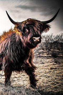 Schotse Hooglander Woest