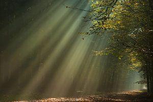 Zonneschijn in herfstbos