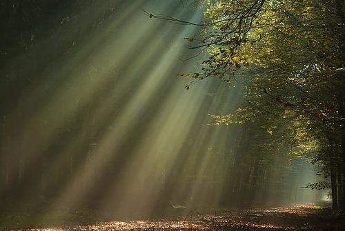Zonnestralen in herfstbos von Klaas Kanis