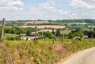 Grazende koeien op de Zuid-Limburgse heuvels van John Kreukniet