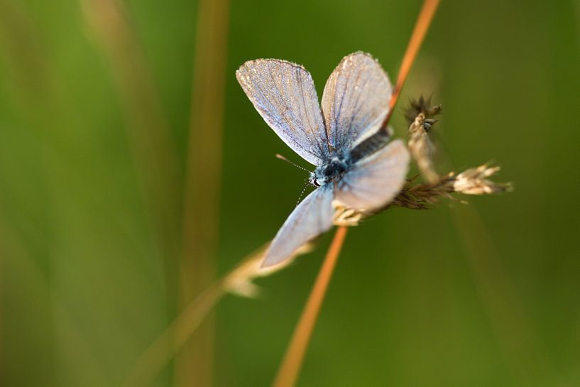Butterfly van Richard Lentjes
