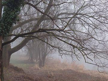 Nebel 02 von Ilona Picha-Höberth