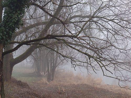 Nebel 02 von