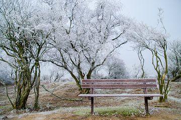 Winter plaat(s) van Yvonne van der Meij