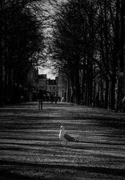 Kleine Taube in der Mitte der Straße von Photography by Naomi.K