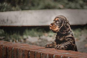 Stadthund Charlie