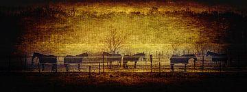Paarden op een manege (panorama)